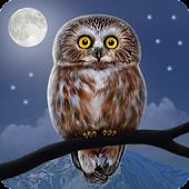Owl Landscape