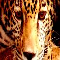 Color Leopard LWP No6 Pro icon