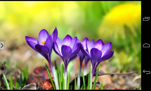 Beautiful Flowers Wallpapers screenshot 23