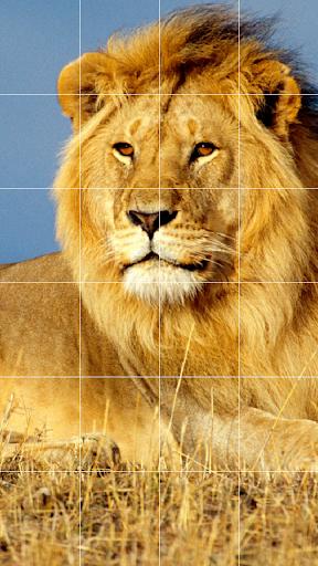 免費下載娛樂APP|Lion Sound Board app開箱文|APP開箱王