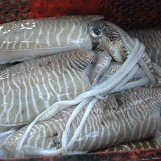 Cuttlefish Veneziana.