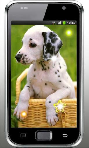 Hello Cute Puppy livewallpaper