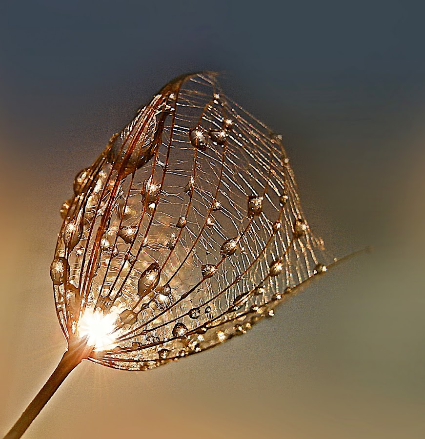Warm Embrace by Marija Jilek - Nature Up Close Other plants ( water, a seed, gpat-beard, warm, sky, nature, drops, plants, embrace, sun )