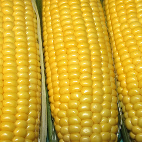All Ears  by Anne Santostefano - Food & Drink Fruits & Vegetables ( food, vegetables, yellow, ears of corn, cobs, corn,  )