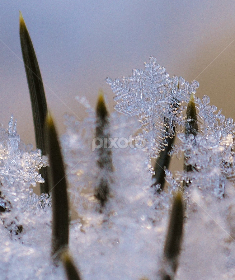 by Katrina Beardsley - Nature Up Close Other Natural Objects ( winter, cold, ice, snow, snowflake )