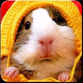 Hamster Wallpaper