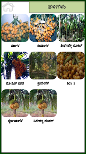 Arecanut Kannada- screenshot thumbnail