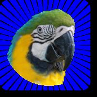100 Animals Megamix (Free) 2.13