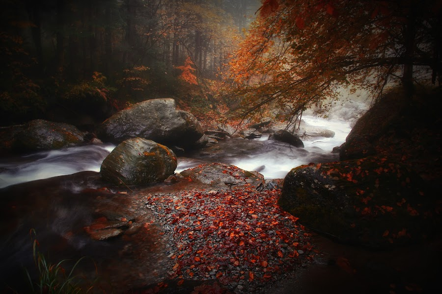 autumn tears by Nicu Hoandra - Landscapes Forests ( autumn, fog, forest, river, colours )