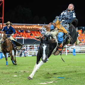 Rodeo Ballet by Glenys Lilley - Sports & Fitness Rodeo/Bull Riding ( bucking horse, cowboys, horse, rodeo, saddle bronc,  )