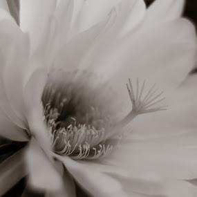 Flower by Anoesjka Botes - Flowers Single Flower ( flower,  )