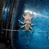 Unidentified Longhorn Beetle