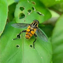wasp-mimicking hoverfly