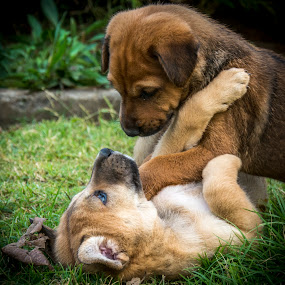 One Love by Shivaang Sharma - Animals - Dogs Puppies ( love, pups, puppies, play, india, puppy, dog, animal )