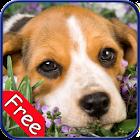 Beagle+ Free icon