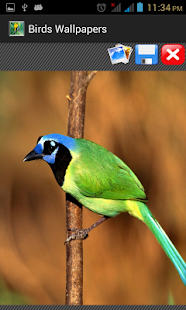 Birds Wallpapers - screenshot thumbnail