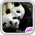 Sweet Pandas Live Wallpaper icon