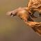 1M8B6012_Mousebird.jpg