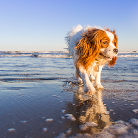 I'm back winter beach. by Sun Hwang - Animals - Dogs Portraits ( state park, texas, ocean, beach, dog )