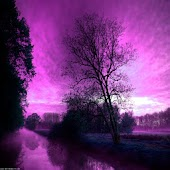 3D Purple tree