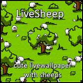 LiveSheep