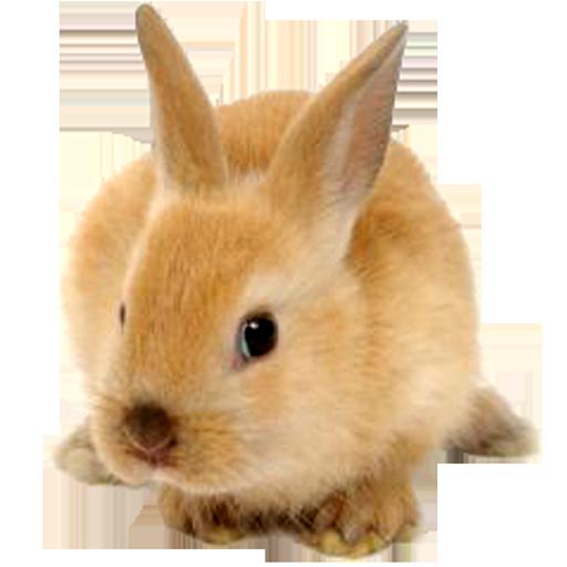 Rabbit Live Wallpaper