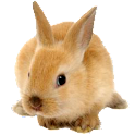 Rabbit Live Wallpaper icon