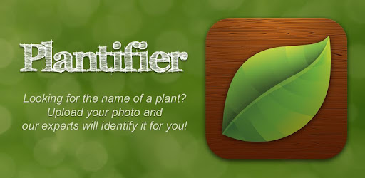 Image result for Plantifier application