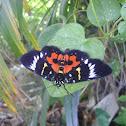 Dayflying Moth