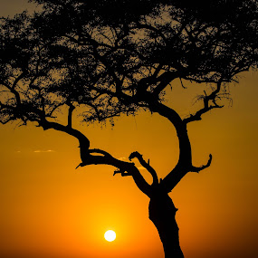 Kenya Sunset by Mike Hayter - Landscapes Sunsets & Sunrises ( red, tree, sunset, silhouette, kenya, , #GARYFONGDRAMATICLIGHT, #WTFBOBDAVIS )