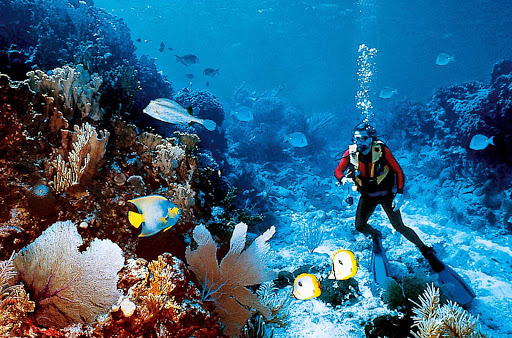 Windstar-Cruises-scuba-diving-tropics - Head to pristine tropical waters for some great scuba diving amid coral reefs and schools of colorful fish on a Windstar cruise.