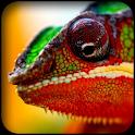 Chameleon Wallpapers icon