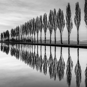 The simmetry by Roberto Melotti - Black & White Landscapes ( water, roberto melotti, reflection, trees, reflections, nikon d810, lake )