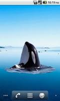Screenshot of Killer Whale Spyhop Sticker