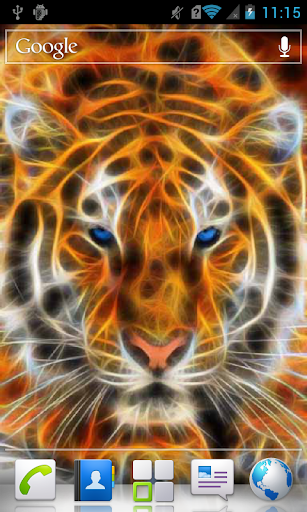 Tiger with Blue Eyes a live