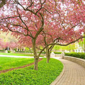 Spring trees by Yu Tsumura - City,  Street & Park  City Parks ( green street, trees, pink )