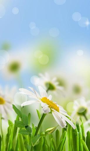 Spring Galaxy S5 Livewallpaper