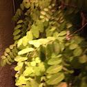 Leaf-Pot