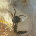 Crab ♀♂
