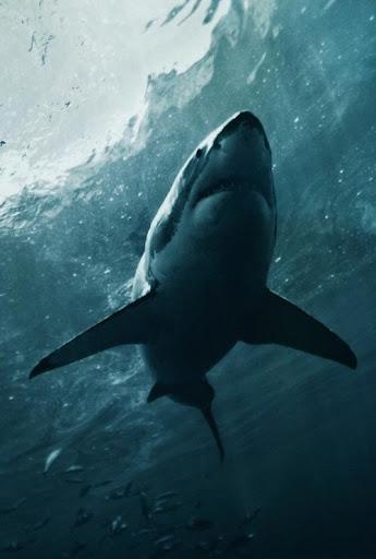 Best Shark Wallpapers