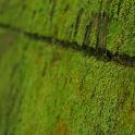 苔 緑色のコケ 壁紙  無料版FREEフリー icon