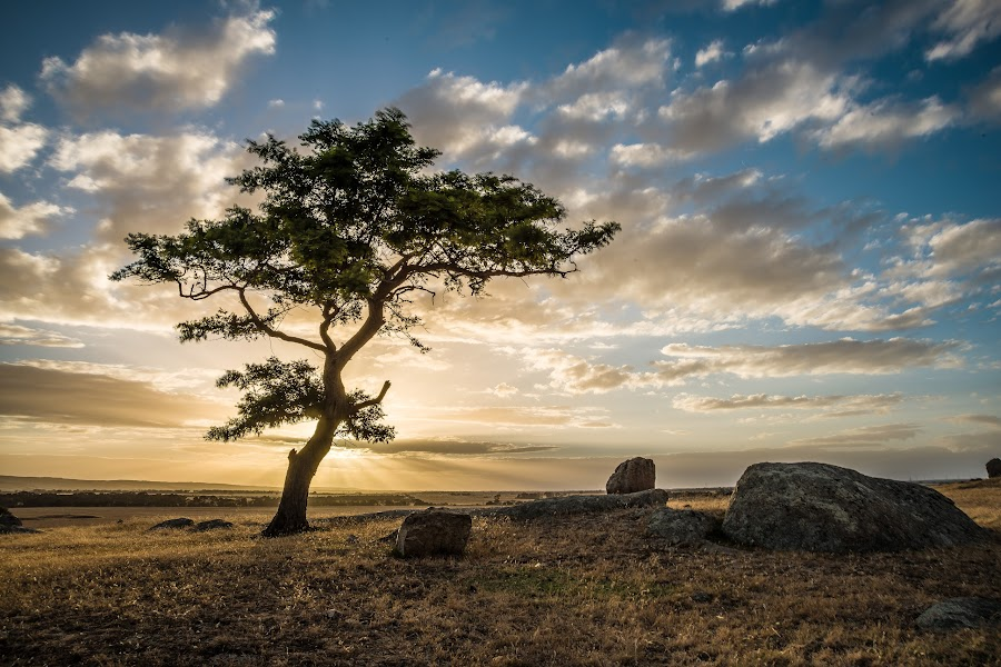 Tree of One by Alan Wright - Landscapes Sunsets & Sunrises (  )