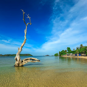 old tree by Andi Setiawan - Landscapes Beaches