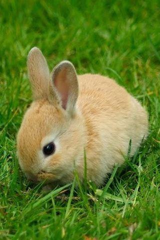 Cute Rabbits live wallpaper