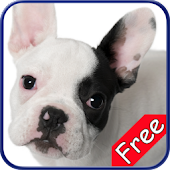French Bulldog+ Free