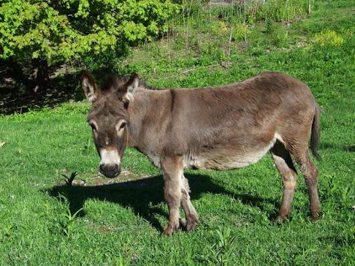Cute Donkey Wallpaper Adorable