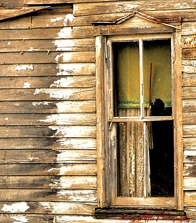 Forgotten life by Lucy Riffle - Buildings & Architecture Decaying & Abandoned (  )