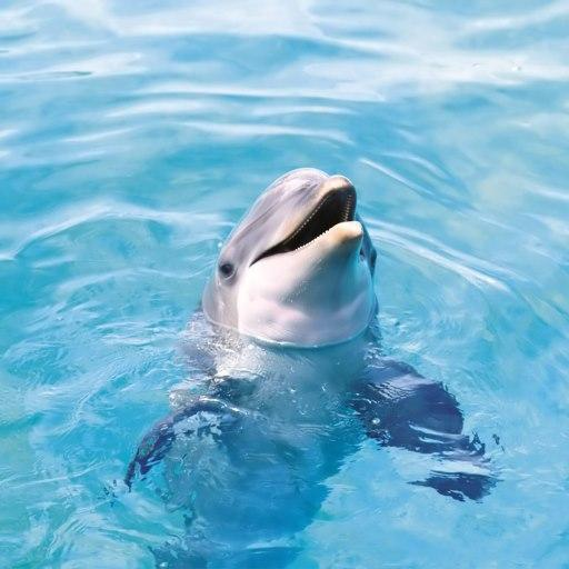 Funny Dolphin Live Wallpaper