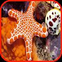 Starfish Wallpaper icon