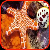 Starfish Wallpaper